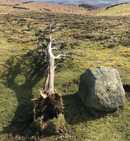 Gtod21 Summit Tree 500x542 (2)