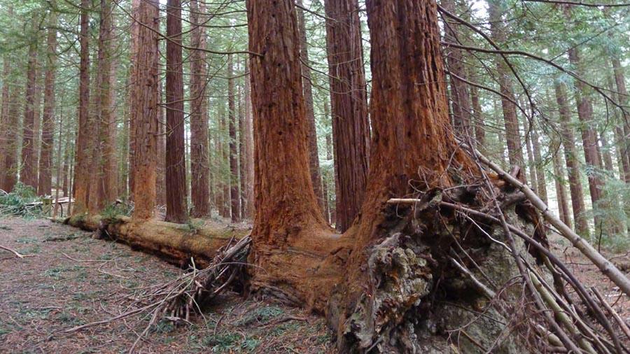 gtod21 5 Redwood 900x506